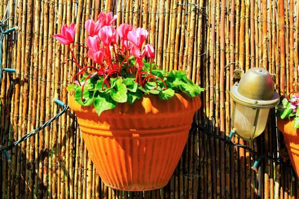 Pot décoratif de fleur - Photo