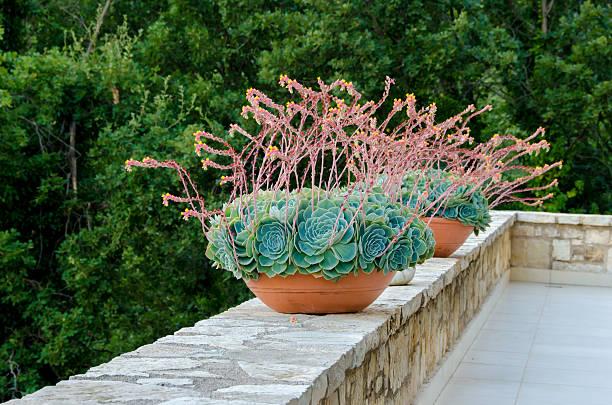 Decorative flower tubs stock photo