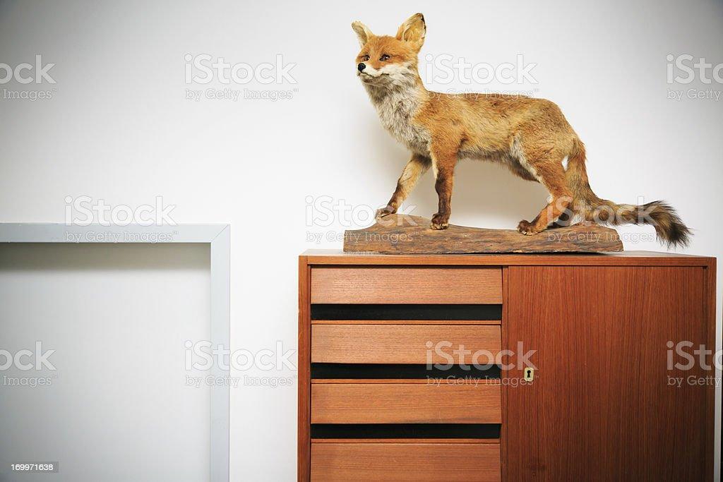 decorative fox stock photo