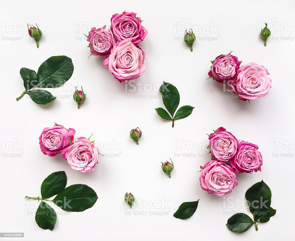 Decorative frame with pink bright roses and leaves stock photo