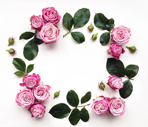 Decorative frame with roses and leaves on white background picture id542293528?b=1&k=6&m=542293528&s=612x612&w=0&h=ghkcs 5ic81ysyey6mtkogu88bl98iocm3mdjepi0rg=