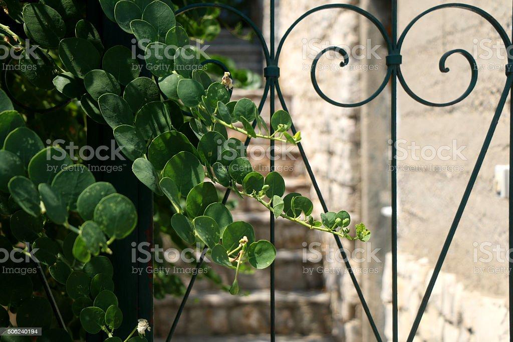 Dekorative Gate – Foto