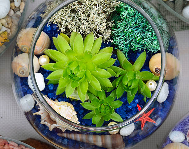 decorative glass vase with succulent plants and seashells. - terrarienpflanzen stock-fotos und bilder
