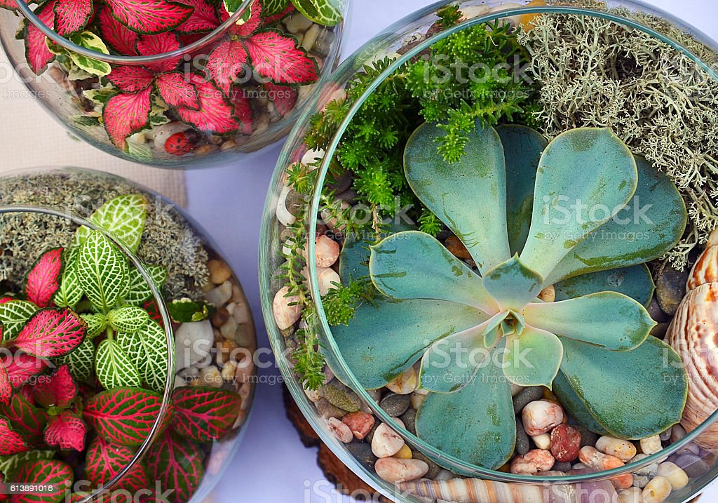 Decorative glass vases with succulent and cactus plants.