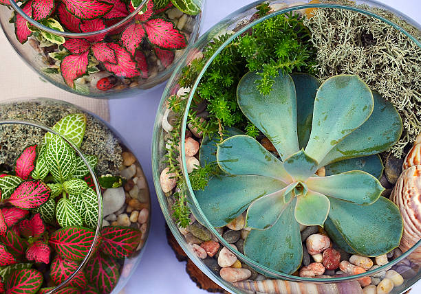 decorative glass vases with succulent and cactus plants. - terrarienpflanzen stock-fotos und bilder