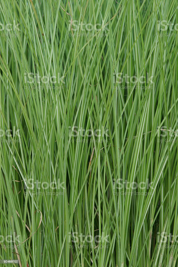 Decorative Grass Texture- Portrait royalty-free stock photo
