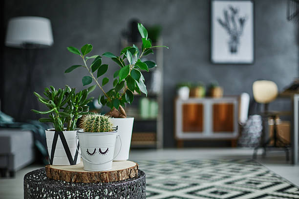 Decorative green houseplant in pot Decorative green houseplant in pot standing on metal table houseplant stock pictures, royalty-free photos & images