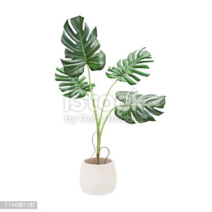 istock Decorative monstera tree planted white ceramic pot isolated on white background. 3D Rendering, Illustration. 1144381187