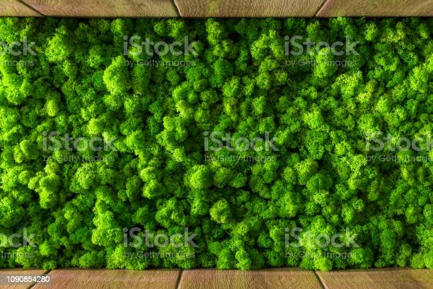 Photo of decorative moss for interior decoration. design moss elements background close up