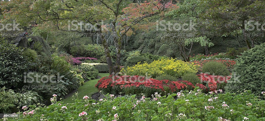 Decorative multi-colour garden. royalty-free stock photo