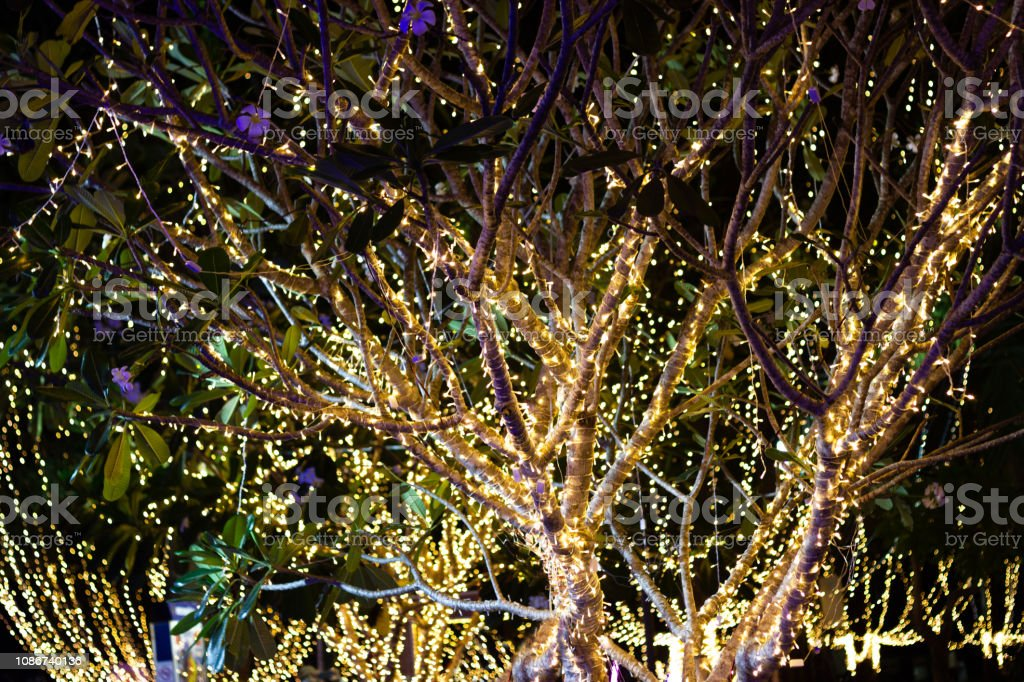 Decorative outdoor string lights hanging on tree in the garden at night time stock photo