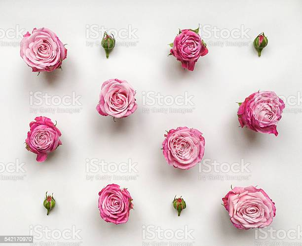 Decorative pattern with roses and buds on white background picture id542170970?b=1&k=6&m=542170970&s=612x612&h=ay90fr7sljrw59k gvwa79nw0oxr5ckneeso xuk d8=