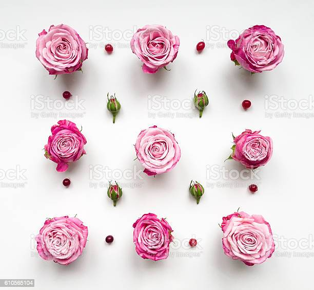Decorative pattern with roses and buds on white background picture id610565104?b=1&k=6&m=610565104&s=612x612&h=h5jzqzimn klunj0uqpiqzd2smify9wyfquxa6x4if4=
