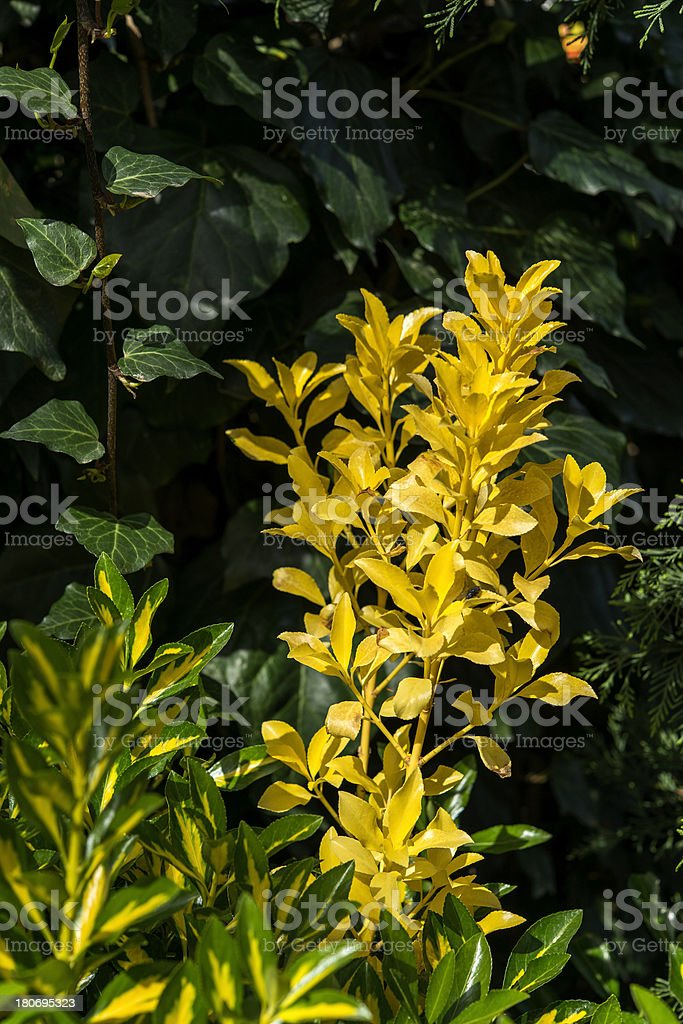 Decorative Plant royalty-free stock photo