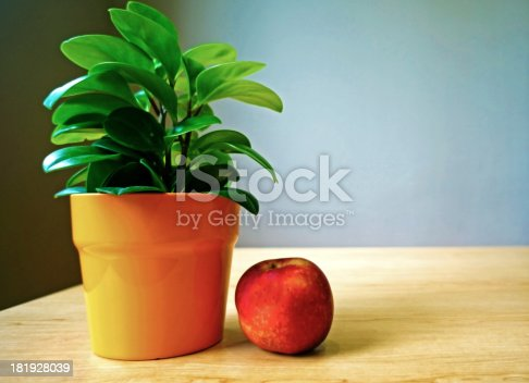 Decorative plant with red apple on table at home
