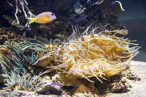 istock Decorative plants and ornamental fish in the aquarium 918916932