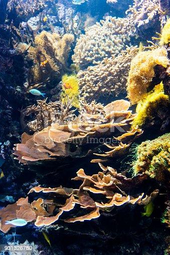 istock Decorative plants and ornamental fish in the aquarium 931326780