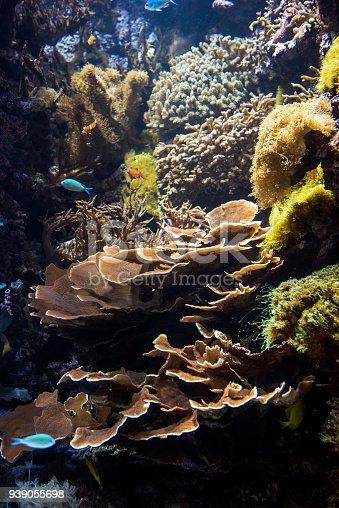 istock Decorative plants and ornamental fish in the aquarium 939055698