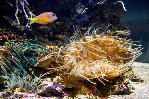 istock Decorative plants and ornamental fish in the aquarium 940214418