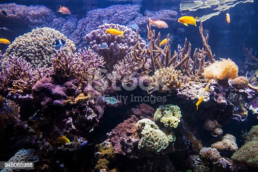 istock Decorative plants and ornamental fish in the aquarium 945065988