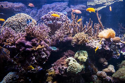 istock Decorative plants and ornamental fish in the aquarium 945065988