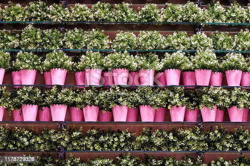 istock Decorative plants and pink pots on a shelf at the store 1178729326