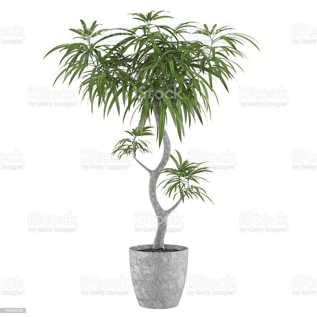 Decorative pot plant palm stock photo