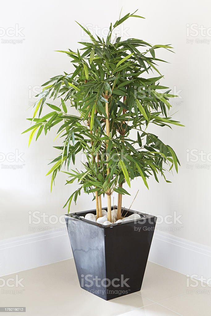 decorative pot plant stock photo