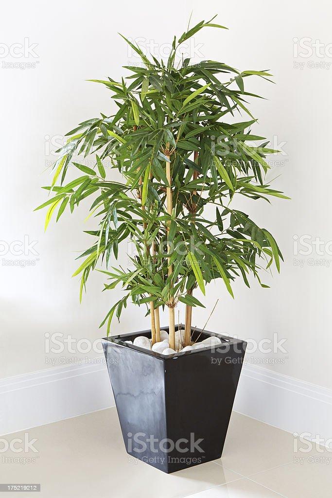 decorative pot plant stock photo