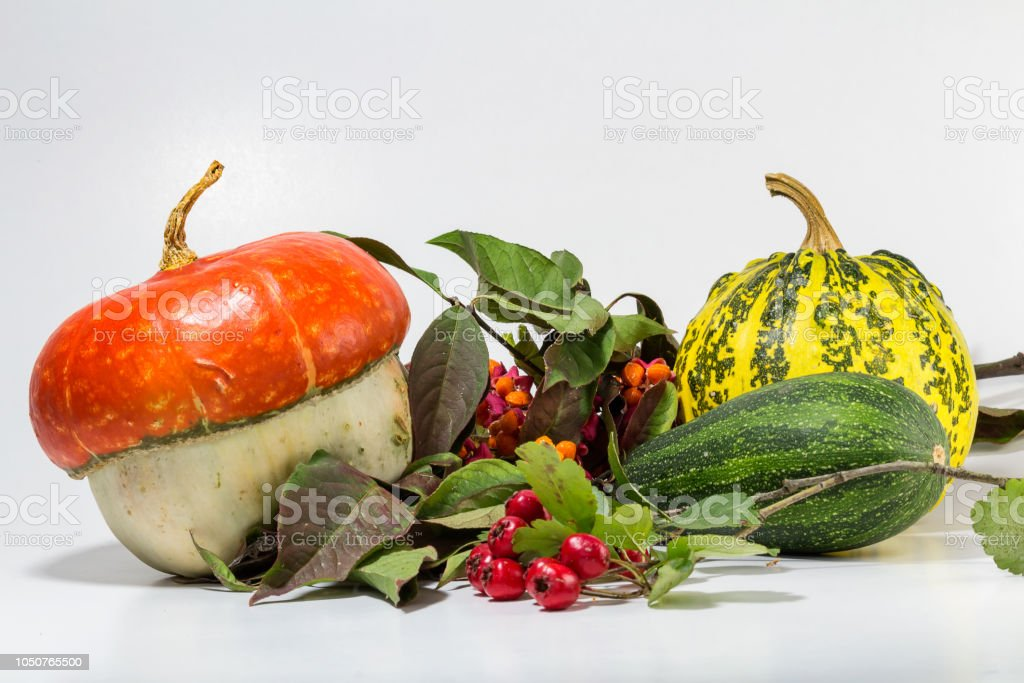 Decorative pumpkin with brier, acorn on white background stock photo