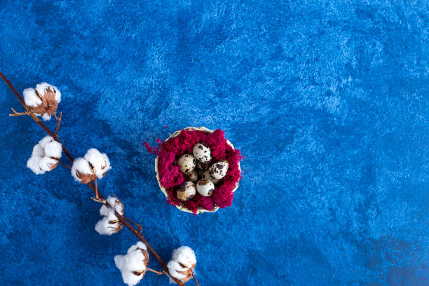 Decorative quail easter eggs in red nest on dark blue background picture id1215093295?b=1&k=6&m=1215093295&s=612x612&w=0&h=elz4lp83tktjeavjzzqnxv5iusdsqn7 1pex4zee3g0=