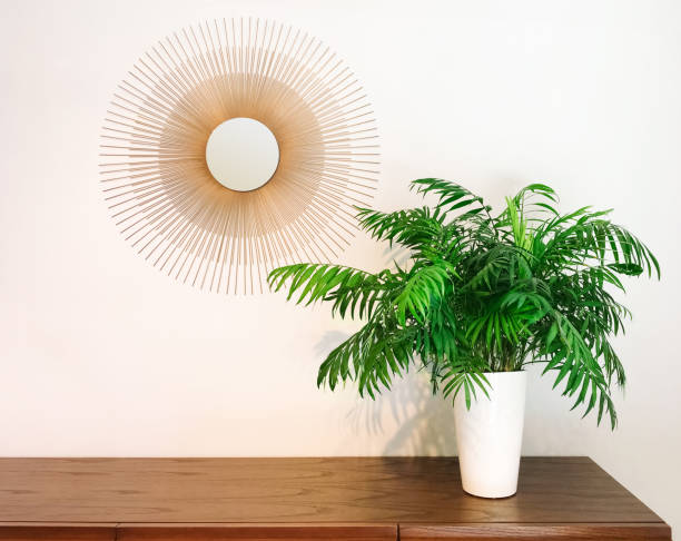 Decorative round mirror and parlor palm plant on a dresser stock photo