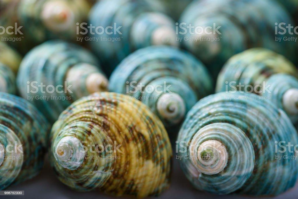 装飾的な貝殻 ストックフォト