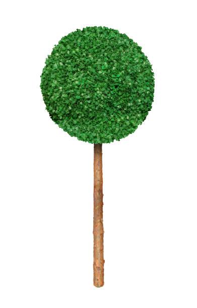 arbre décoratif de sphérique - buis photos et images de collection