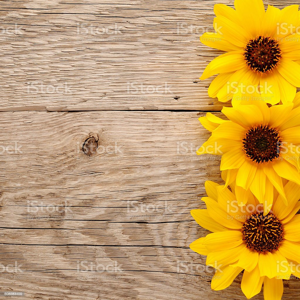 Decorative Sunflowers On Wooden Background Royalty Free Stock Photo