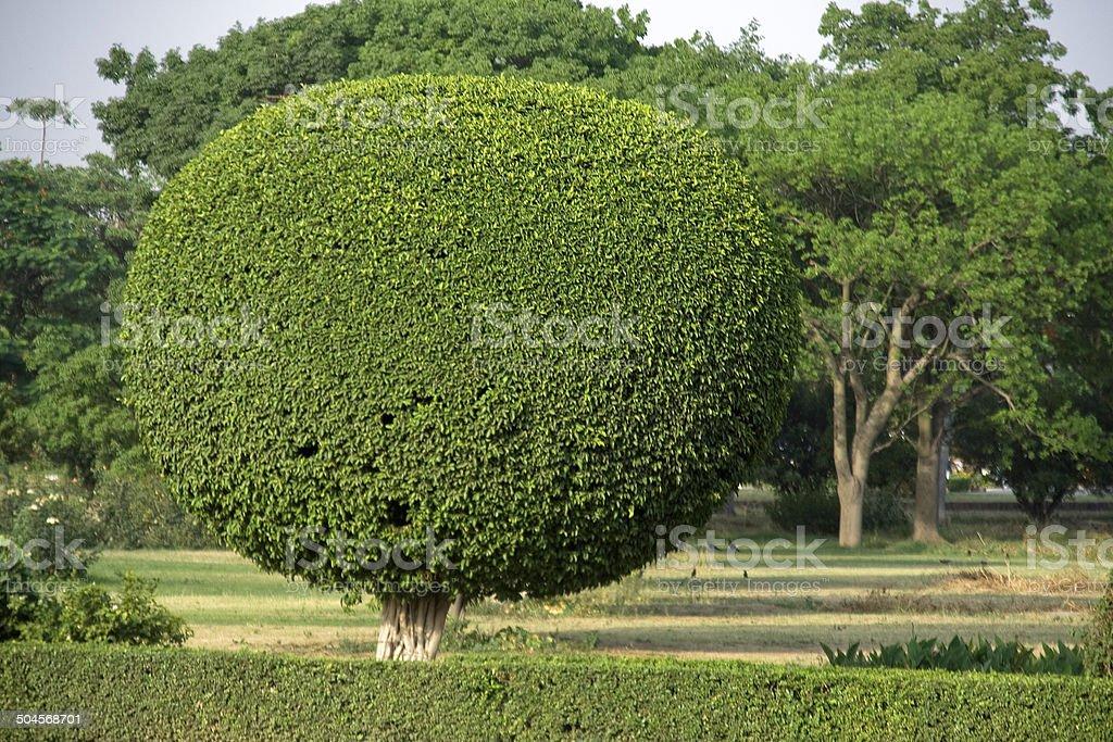 Decorative Tree Pruning royalty-free stock photo