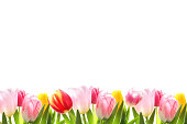Decorative tulip border