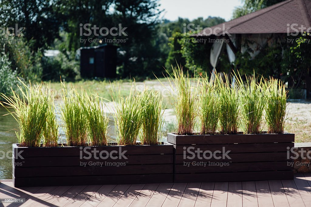 Decorative vase and trimmed bushes, royalty-free stock photo