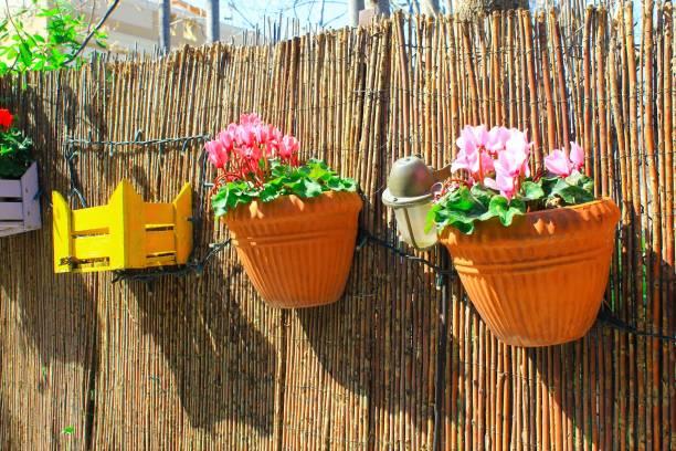Caisses en bois décoratives et pots de fleurs - Photo