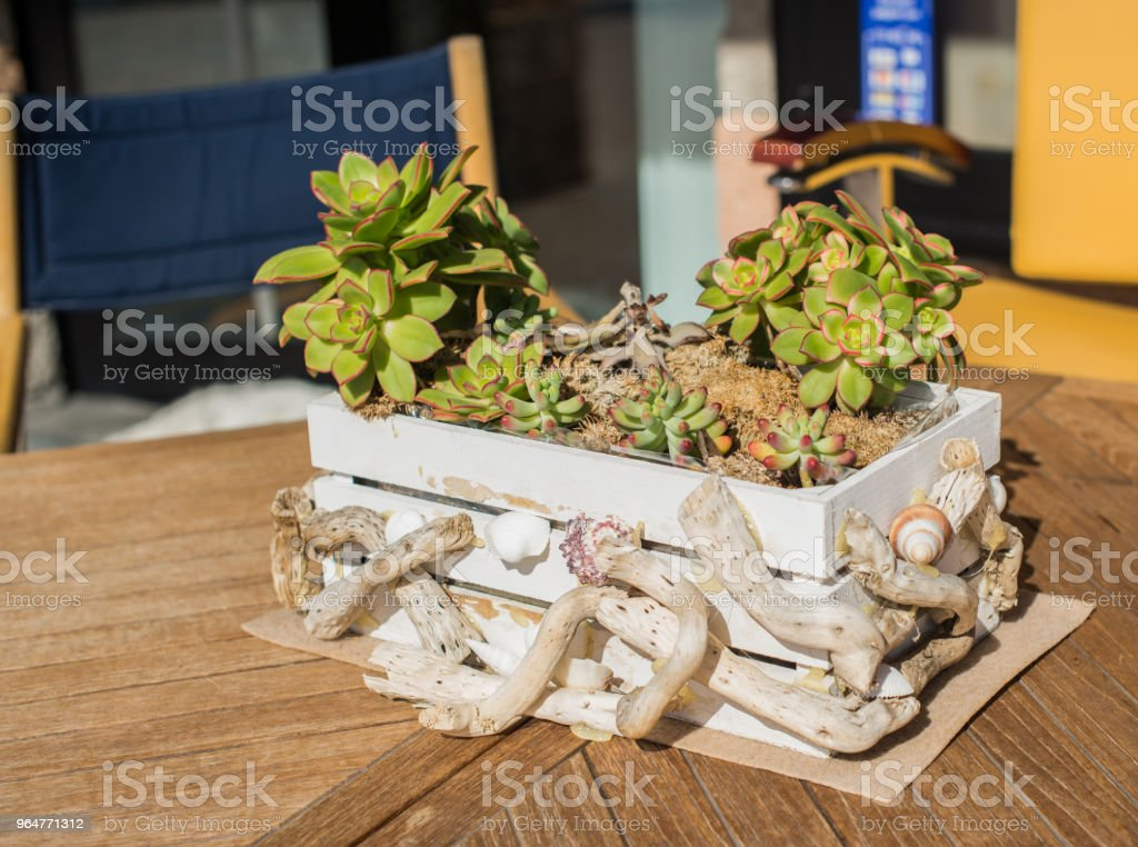 Decorative wooden flower box on the table in the restaurant. royalty-free stock photo
