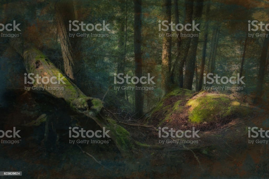 Deep dark fantasy forest stock photo