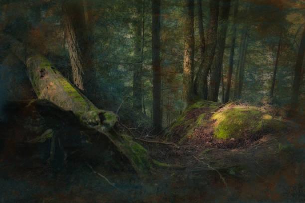 tiefe dunkle fantasy wald - jeff wood stock-fotos und bilder