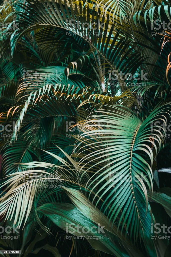 Deep dark green palm leaves pattern stock photo