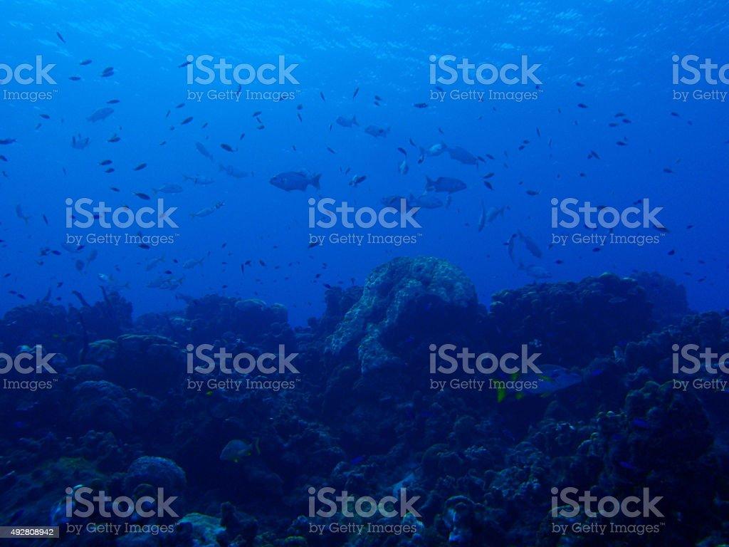 deep dive stock photo
