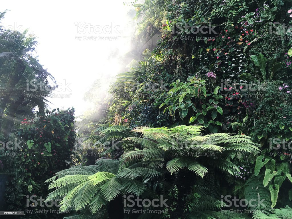 Deep down in the foggy Tropical Rainforest. royalty-free stock photo