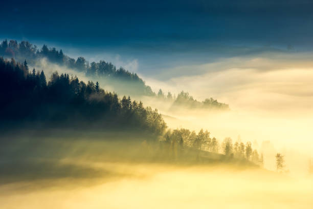 deep fog above the valley at sunrise - trees in mist stock pictures, royalty-free photos & images