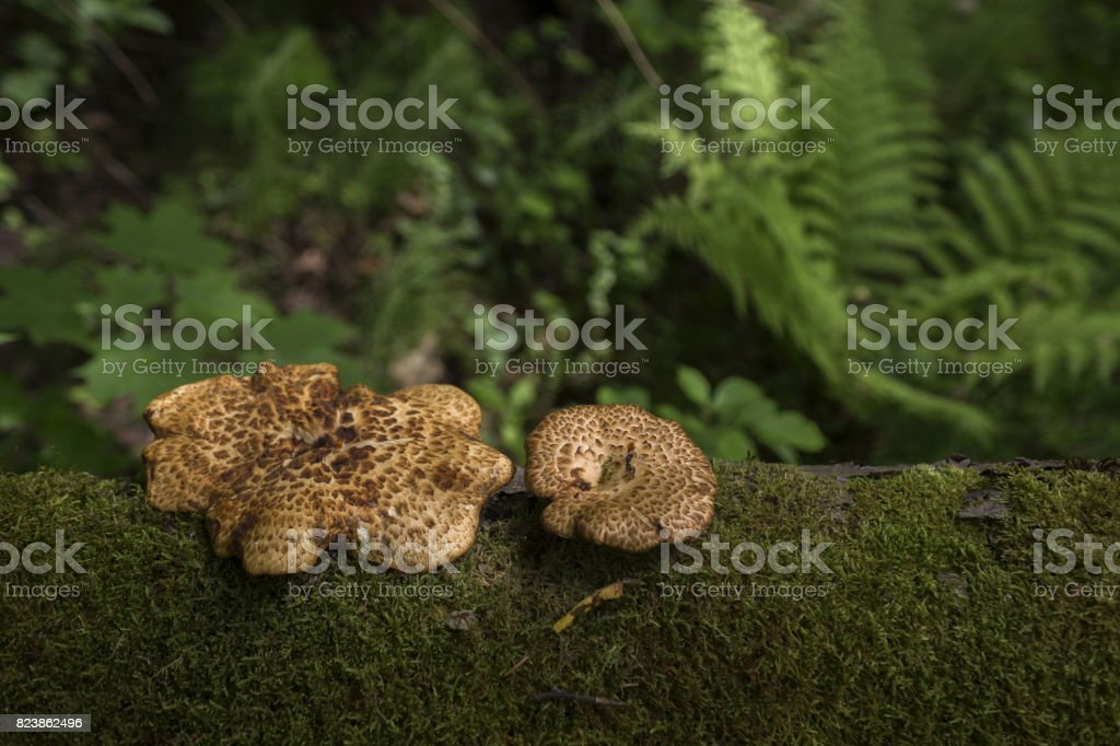deep forest mushrooms photo stock photo