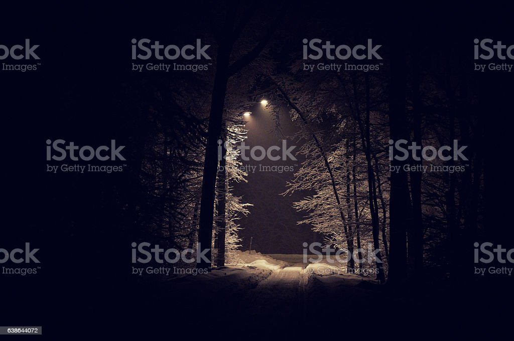 deep foresta foto stock royalty-free