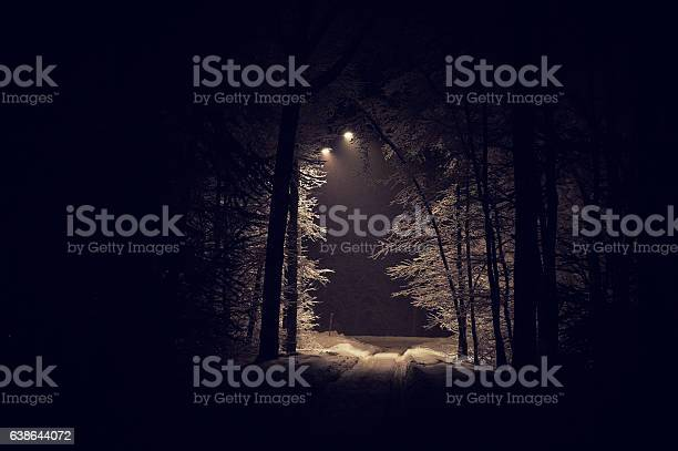 Photo of deep forest