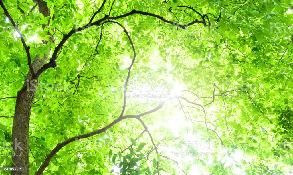 Árbol de Deep Forest - foto de stock